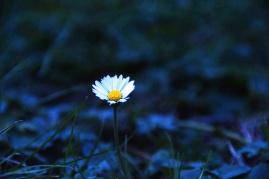 flower ph